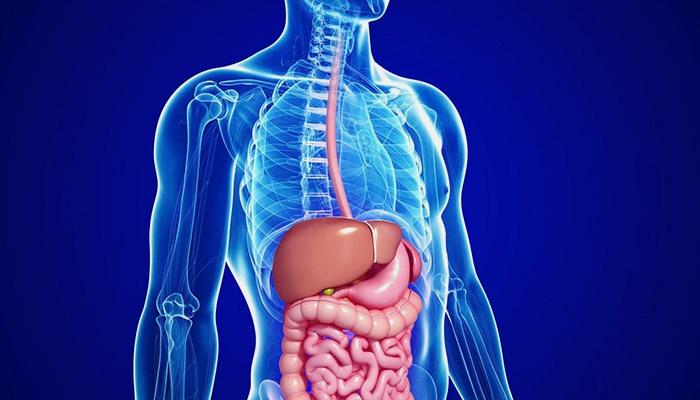 Die Struktur der Leber ist heterogen: Diagnose und Behandlung
